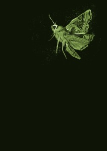 Moth_Green